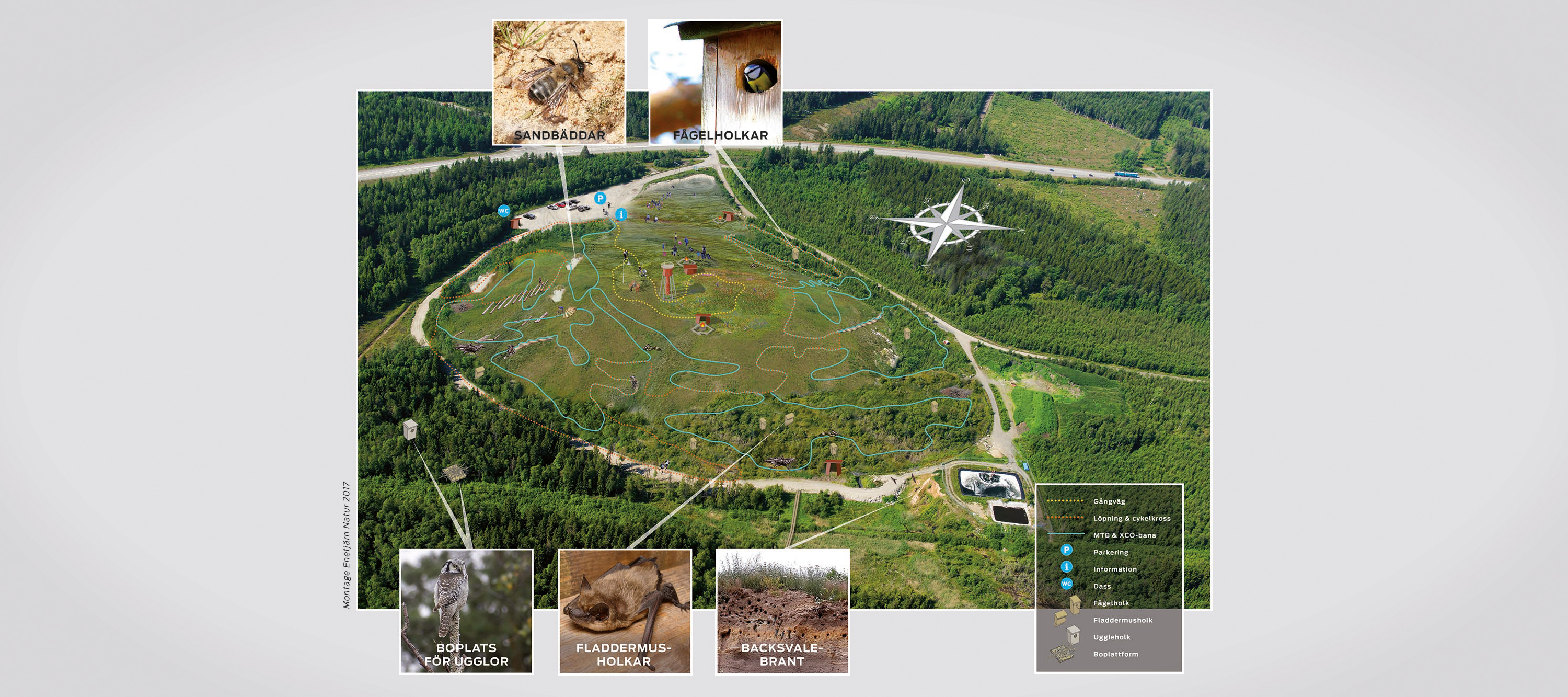 From industrial landfill to nature area with animals and plants